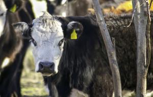 Nuovo bando per ridurre ammoniaca e gas serra