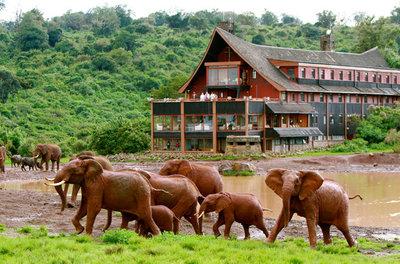 The ark hotel  aberdare national park