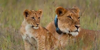 Aberdares  lake nakuru and masai mara safari %285 days kenya safari%29