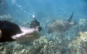 Snorkling galapagos2
