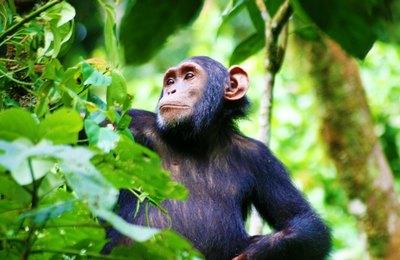 Kibale forest national park1
