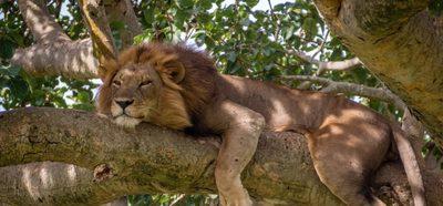 Queen elizabeth national park ishasha