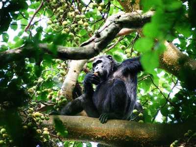 Kibale forest national park   copy