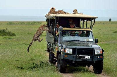 Lake bogoria resort cheetah on vans