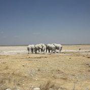 Day 11   sunway namibia etosha michieu lourens .jpg