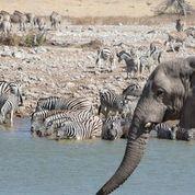 Day 12   sunway namibia etosha