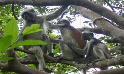 Dja fauna reserve 8
