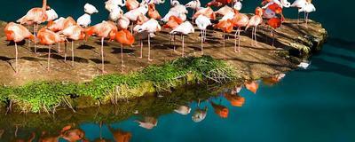 Birdings in waza