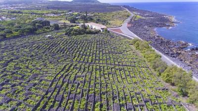 Pico madalena vineyards pico agosto 2019153