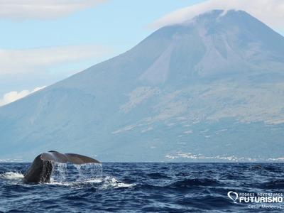 Whale pico mountain