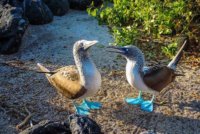 Wildlife in marchena island