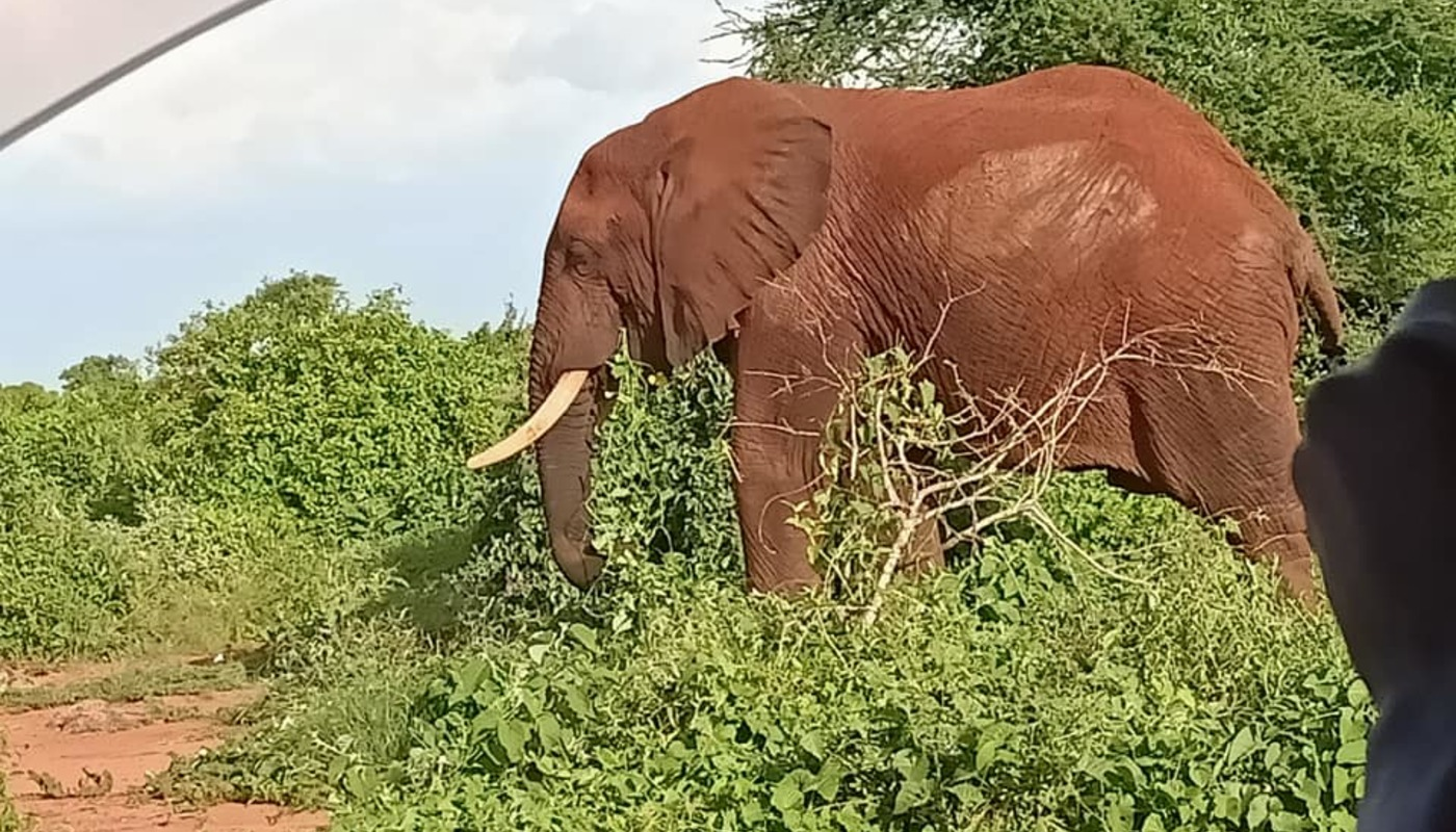 Febrary elephant photo with hand