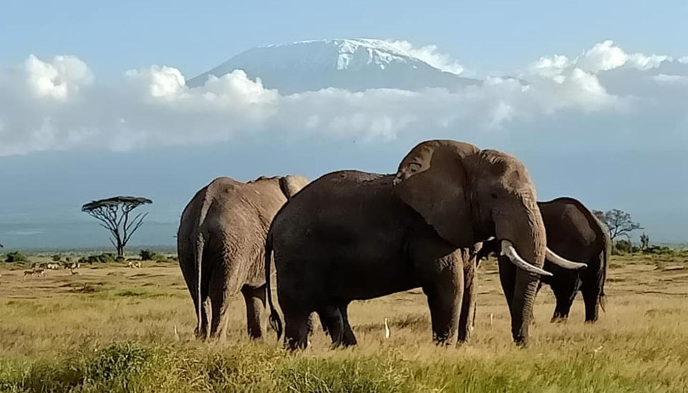 February mt kili with elephants