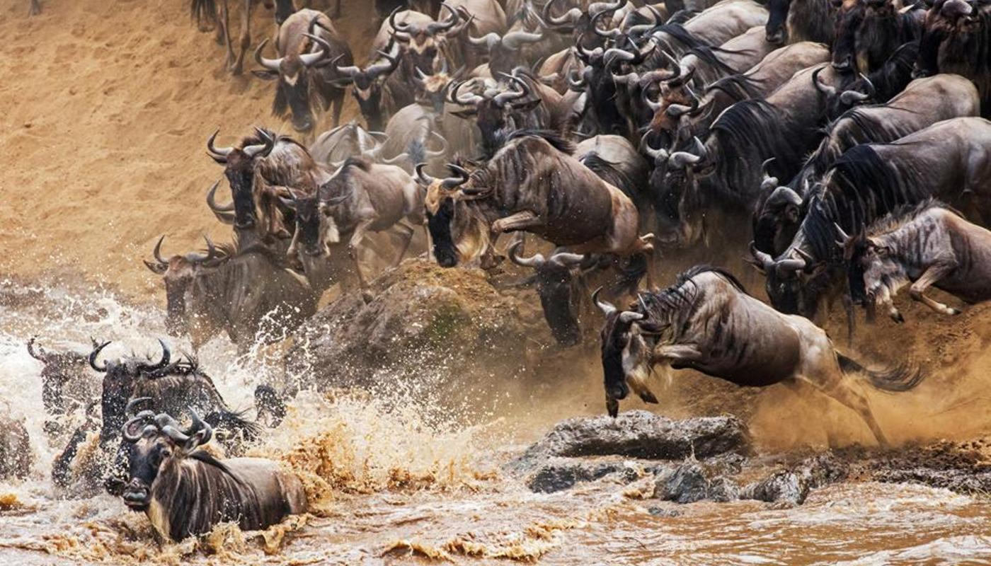 Wildebeest migratio dec