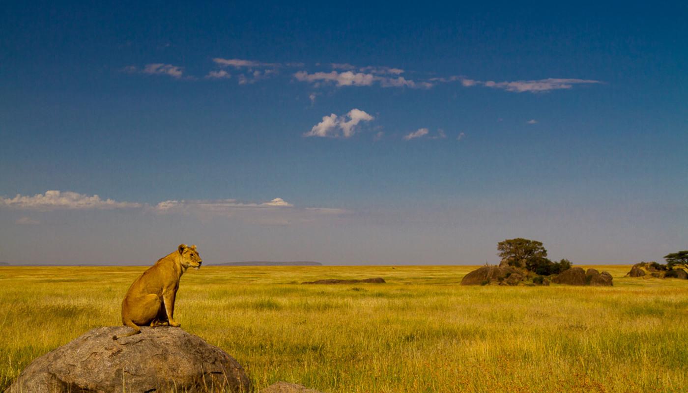 Solo traveler private safari  expect in africa safari photo