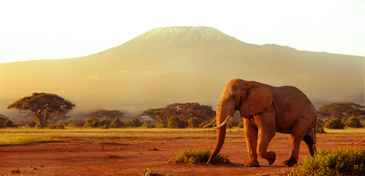 Ambo kili elephant view