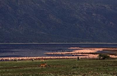 Pic wb lake bogoria  landschaft und details %2822%29