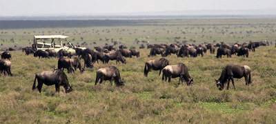 2015 africa tanzania serengetimigrationcamp ak hero