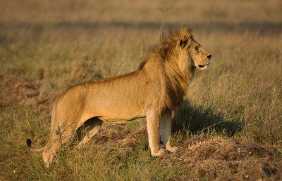 7 days serengeti luxury lodge safari