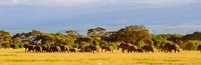 Amboseli3   copy
