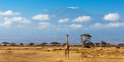 Amboseli   copy
