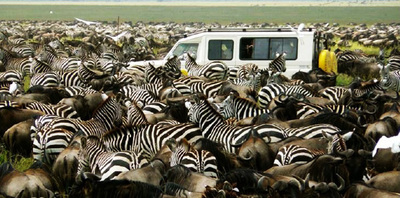 June july great migration tanzania tracking