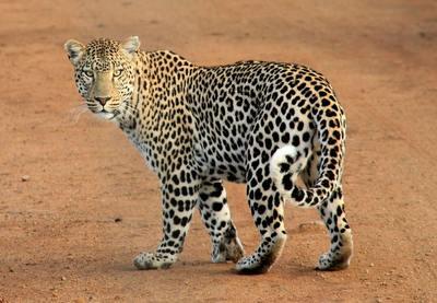 5 days tanzania southern safari adventure %28selous game reserve   mikumi national park safari%29