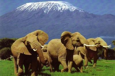 Masai mara  lake nakuru and amboseli safari %286 days kenya safari%29