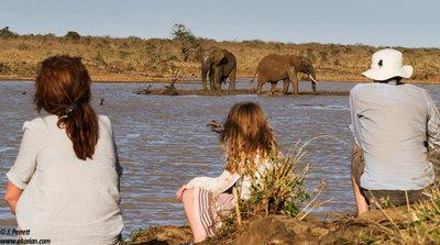 Dam elephants
