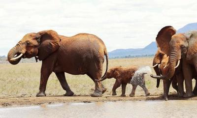 2 days mombasa safari to tsavo east
