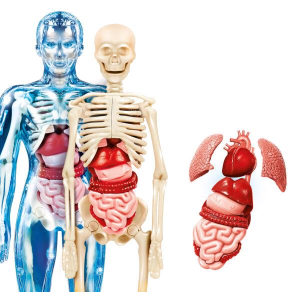 Il Corpo Umano - FOCUS / SCIENZA&GIOCO - Fino al -20%