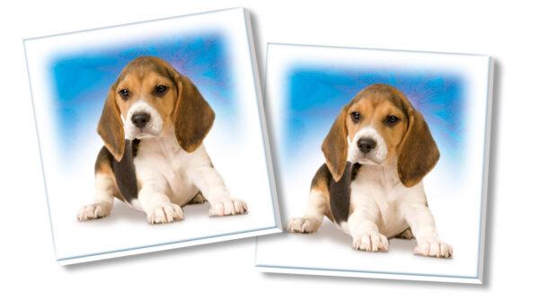 CLEMENTONI - 12834 - Memo Games Cuccioli ALTRI Unisex 12-36 Mesi, 3-4 Anni, 3-5 Anni, 5-7 Anni, 5-8 Anni SAPIENTINO