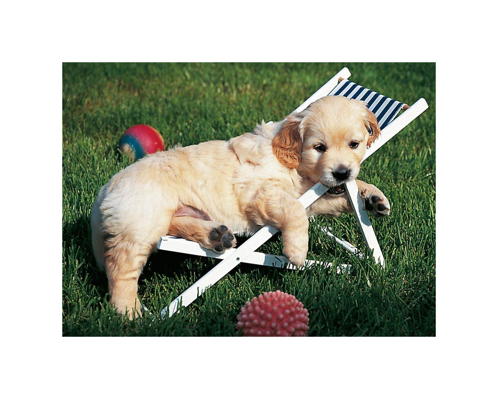 Ravensburger - puzzle 500 pezzi - cucciolo di golden retriever - Ravensburger1