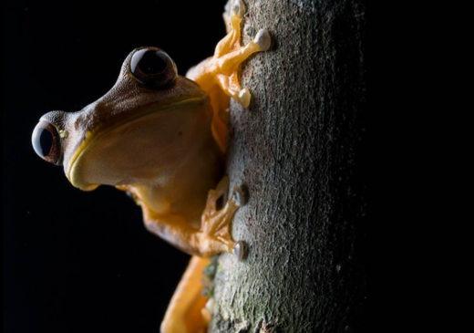 Amazon Rainforest Frog | Ecuador