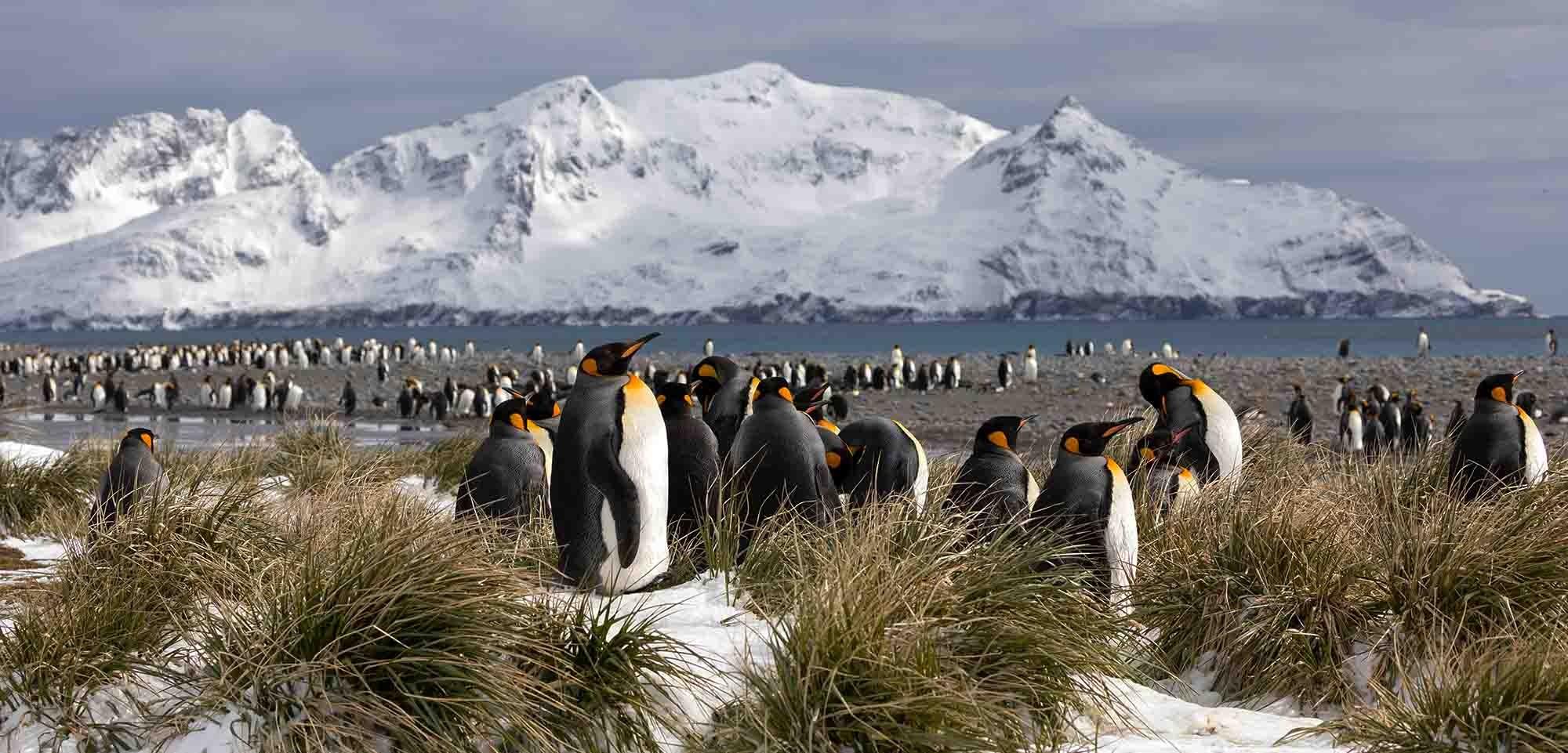 Best of Antarctica (New Year in Antartica)