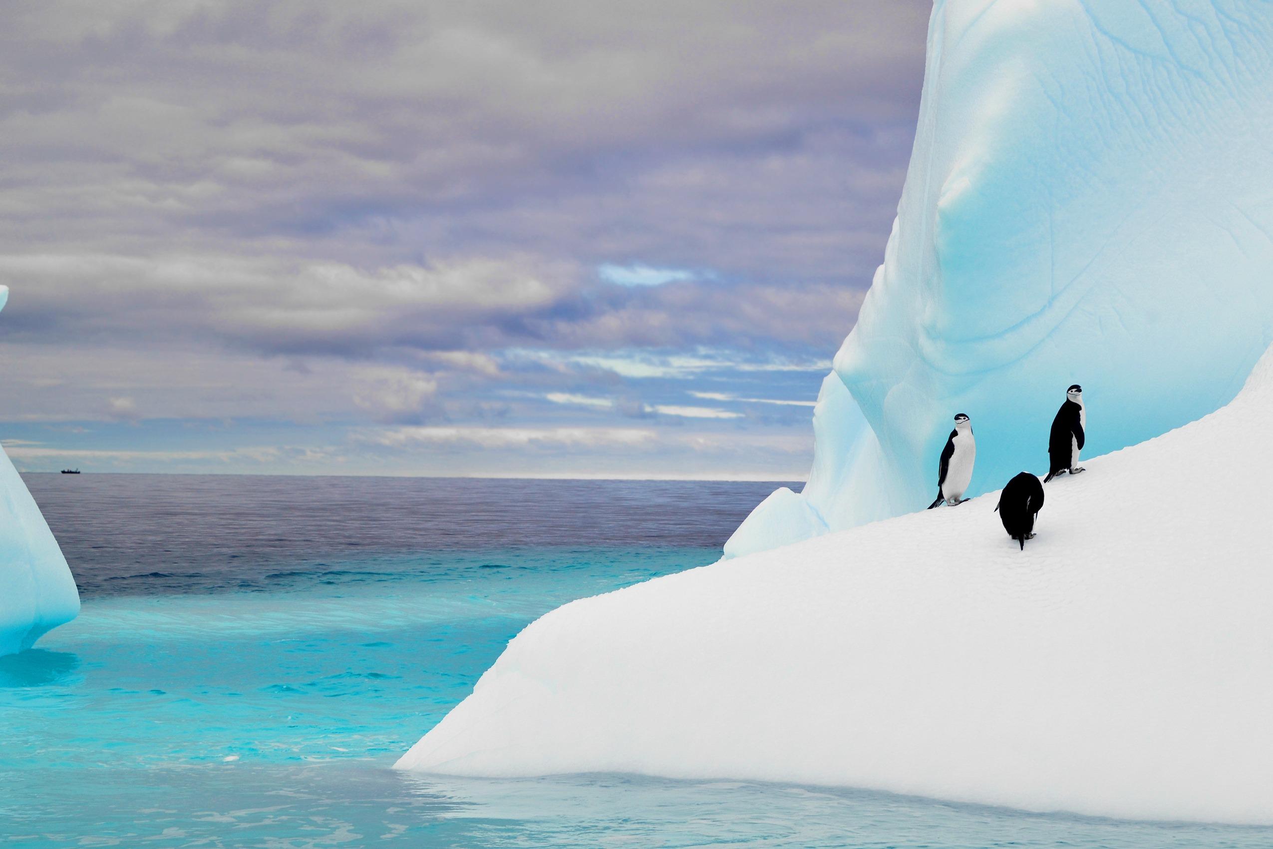 Antarctica, South Georgia & Falklands Odyssey