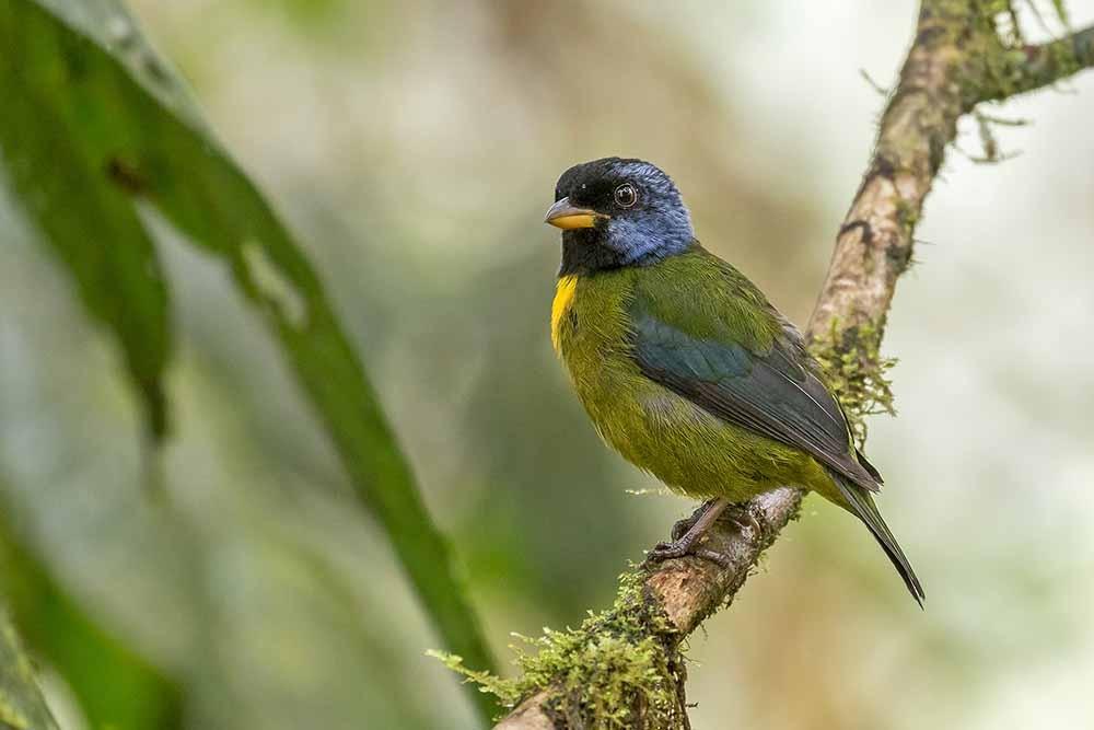 Birds Amazon Rainforest | Ecuador