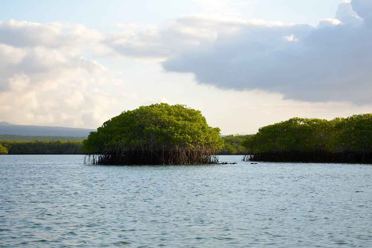 Galapagos in Style Short Luxury Cruise