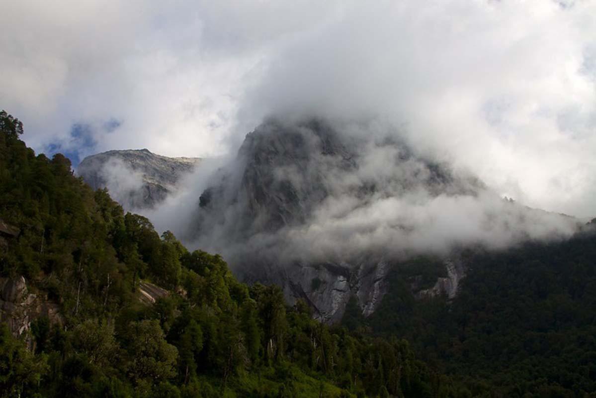 Alerces  | Patagonia
