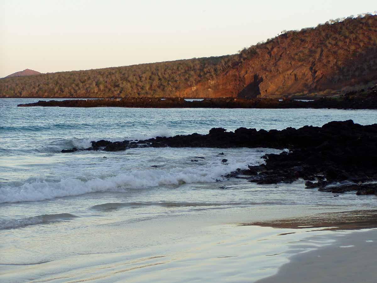 Cormorant Paint | Galapagos