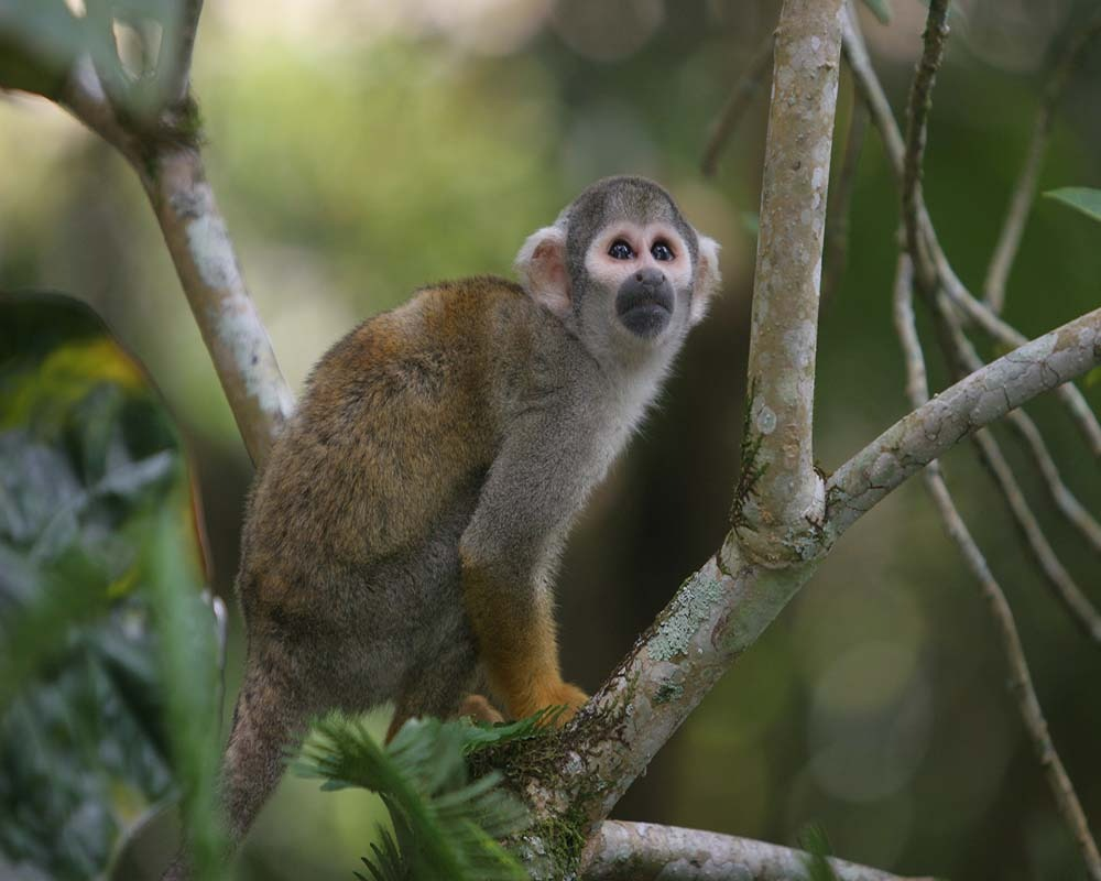 Expedition in the Yasuni National Park