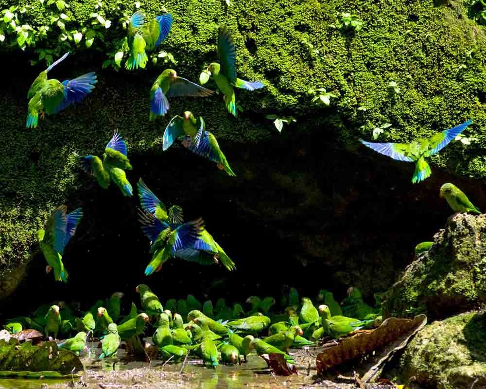 Wildlife | Ecuador