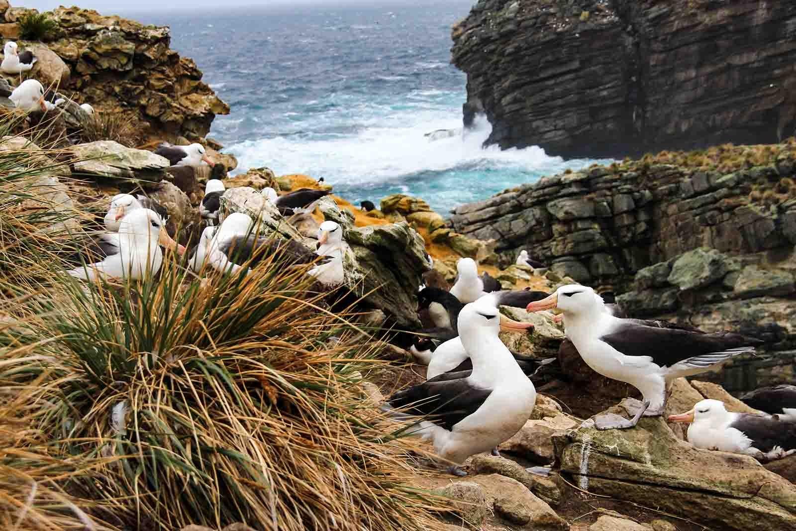 Falklands, South Georgia & Antarctic Explorer