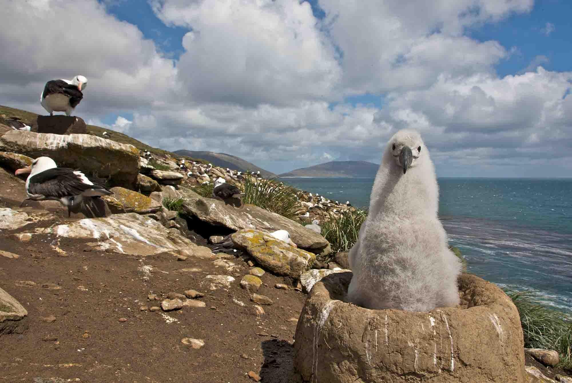Albatross | Antarctica