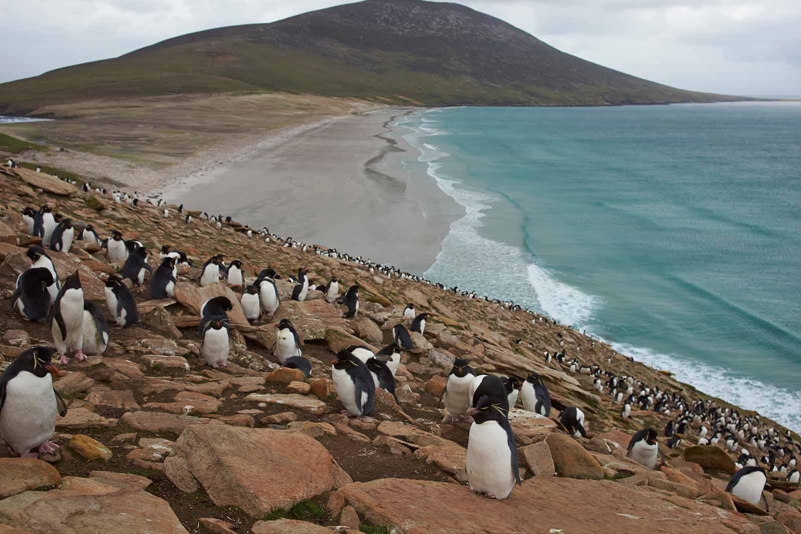Antarctic Odissey