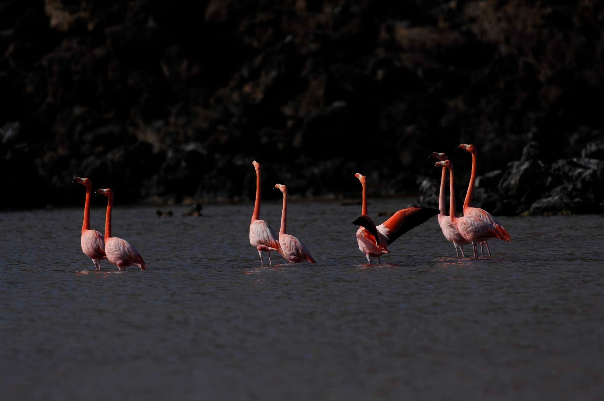 Flamingos Lagoon | Galapagos islands | South America Travel