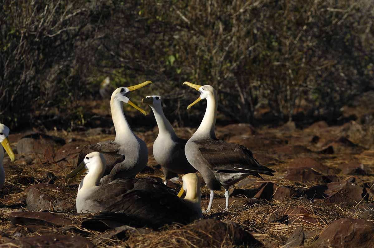 Educational 5-Days Boat Trip Galapagos Experience