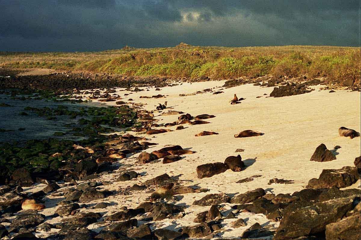 Gardner Bay| Galapagos