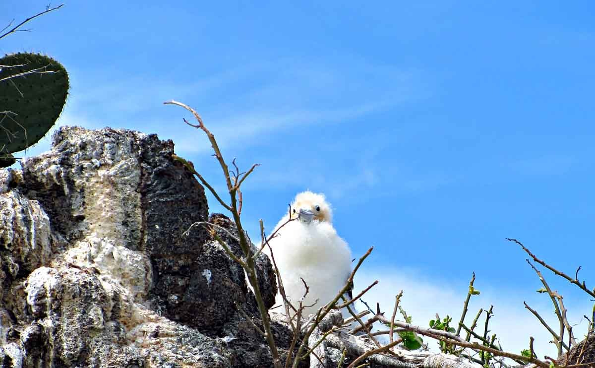 Genovesa Island | Galapagos islands | South America Travel