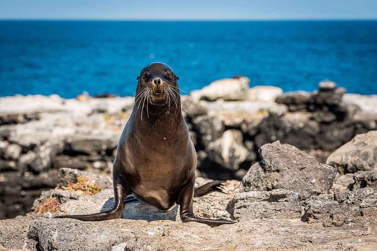Lobos Islands | Galapagos | South America Travel